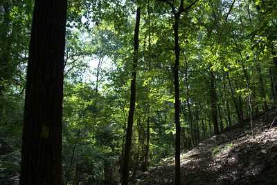Yellow trail, Sweetwater Creek State Park
